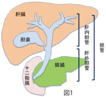 kouseikaikiji_no24_09